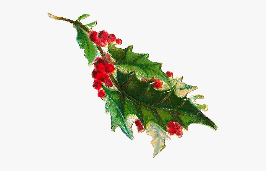 Vintage Christmas Holly Png, Transparent Clipart