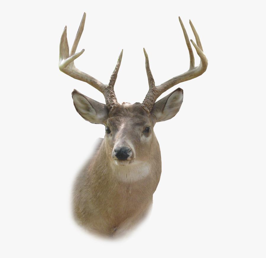 Deer Head Png, Transparent Clipart