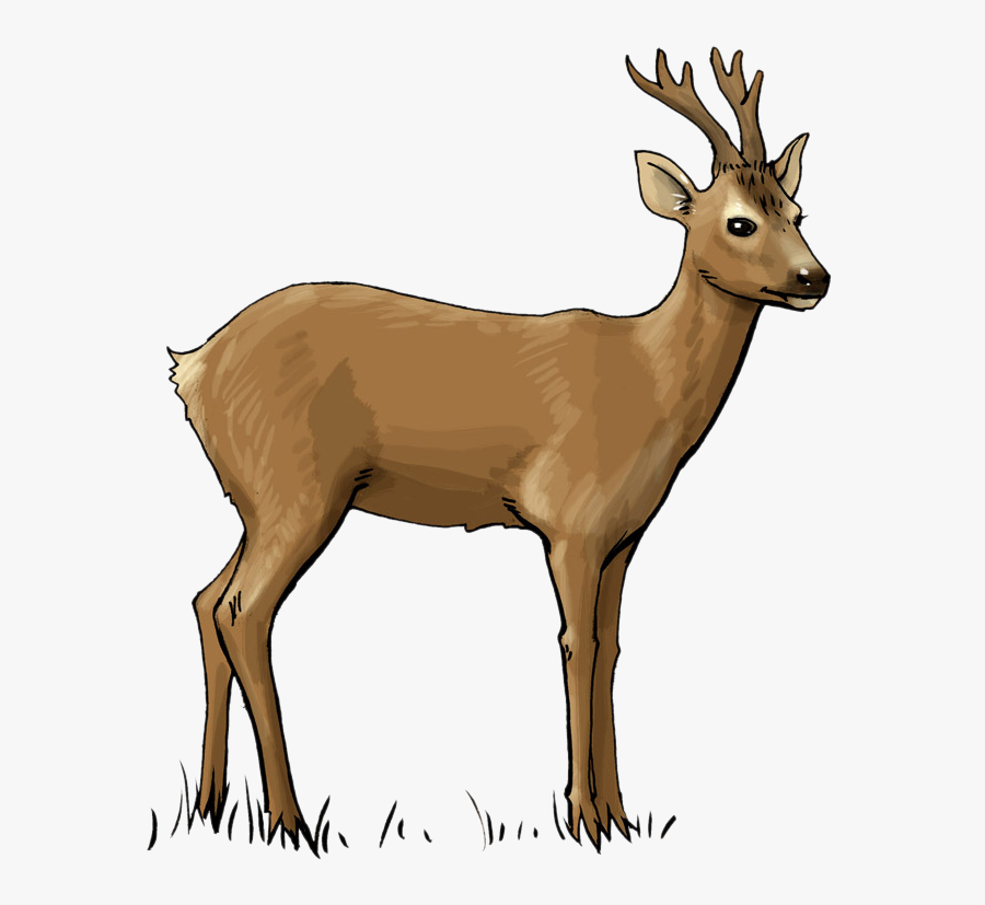 Deer Free To Use Clip Art - Roe Deer Clipart, Transparent Clipart