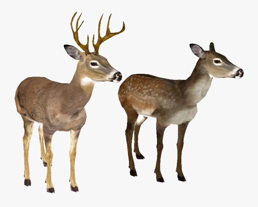 Whitetail Deer Head - White Tailed Deer No Background, Transparent Clipart