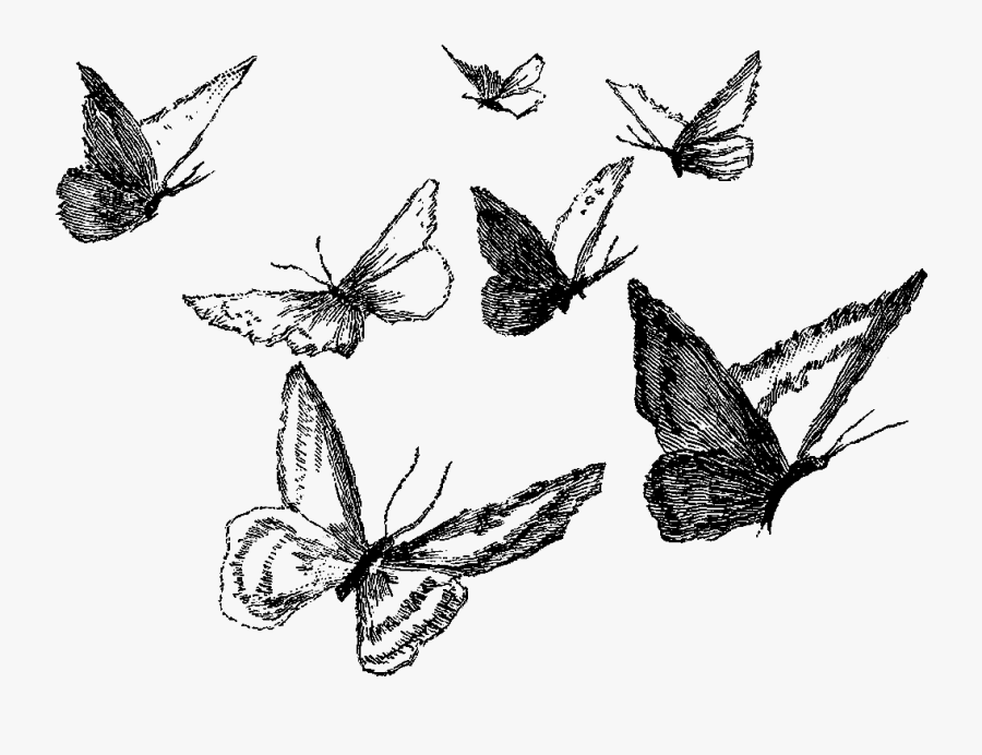 Clipart Black And White Ankle Drawing Pencil - Butterfly Pencil Drawing Png, Transparent Clipart