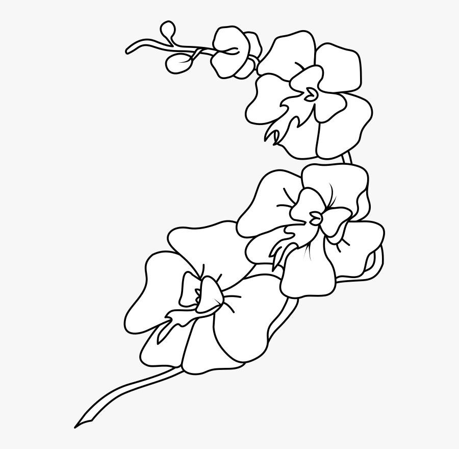 Clip Art Orchid Black And White , Free Transparent Clipart ...