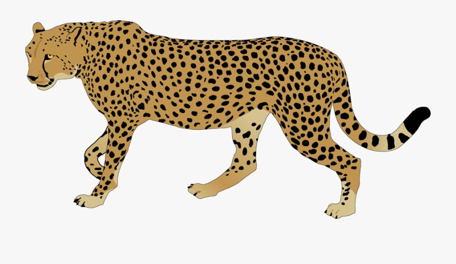 Cheetah Clip Art - Clipart Leopard, Transparent Clipart