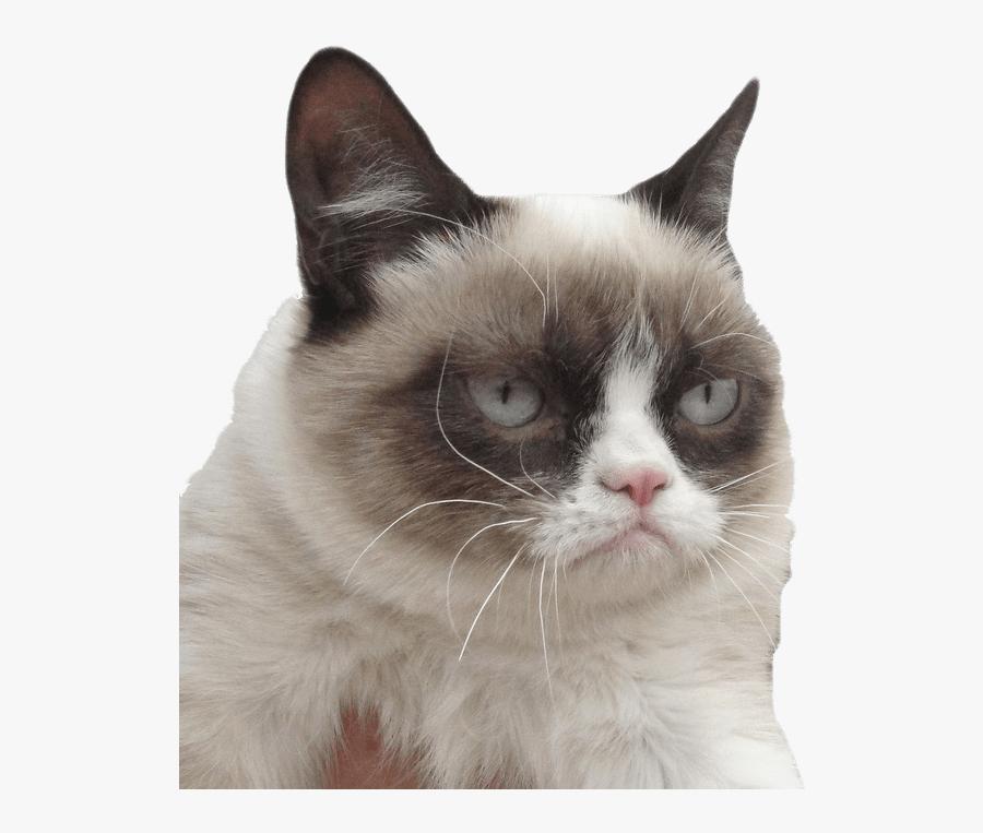 Grumpy Cat Meh Meme, Transparent Clipart