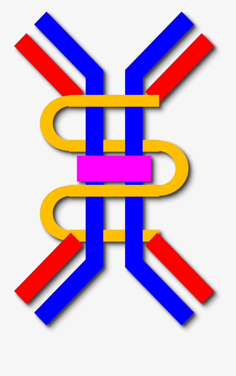 Iga Antibody Png Clipart , Png Download - Iga Antibody Png, Transparent Clipart
