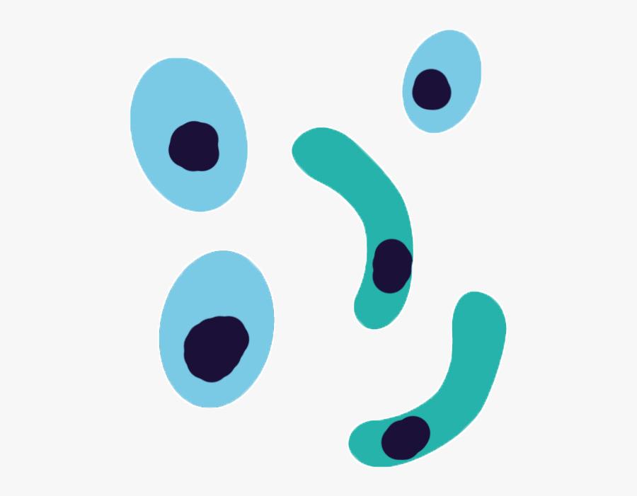 Plasmodium Falciparum Antibodies - Plasmodium Clipart, Transparent Clipart
