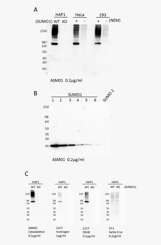 Transparent Antibodies Clipart - Monochrome, Transparent Clipart