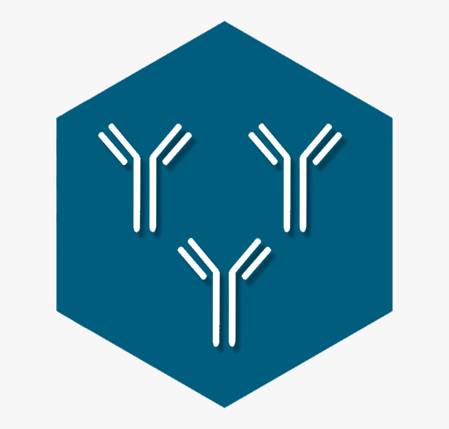 Polyclonal Antibodies - Graphic Design, Transparent Clipart