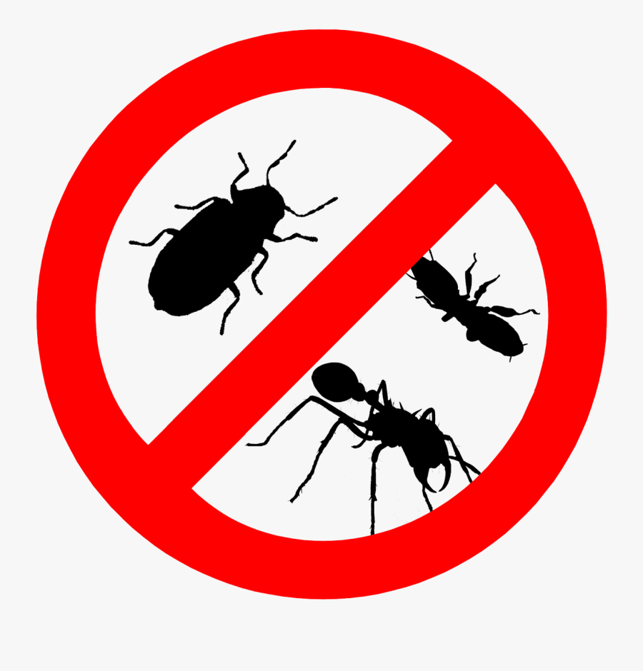 Insect Clipart Bed Bug - Pests Control, Transparent Clipart