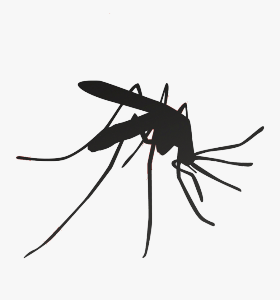 Mosquito Household Insect Repellents Pest Control - Mosquito Transparent Image Black And White, Transparent Clipart