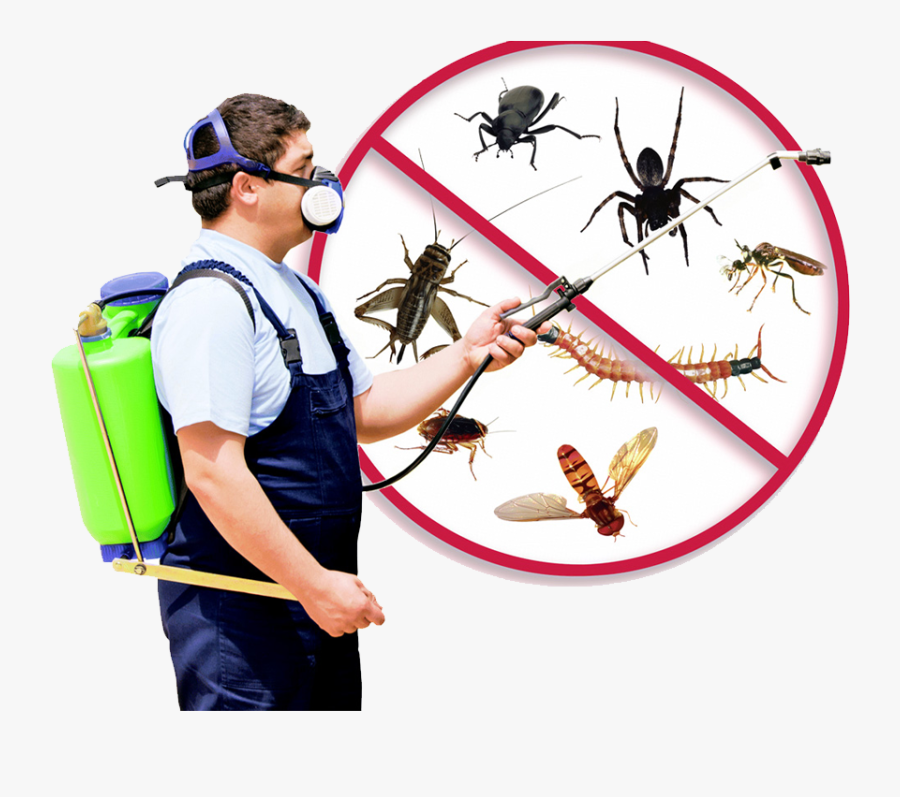 Control Of Insects And Rodents, Transparent Clipart