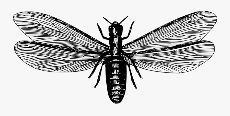 Termites Fly Black And White, Transparent Clipart