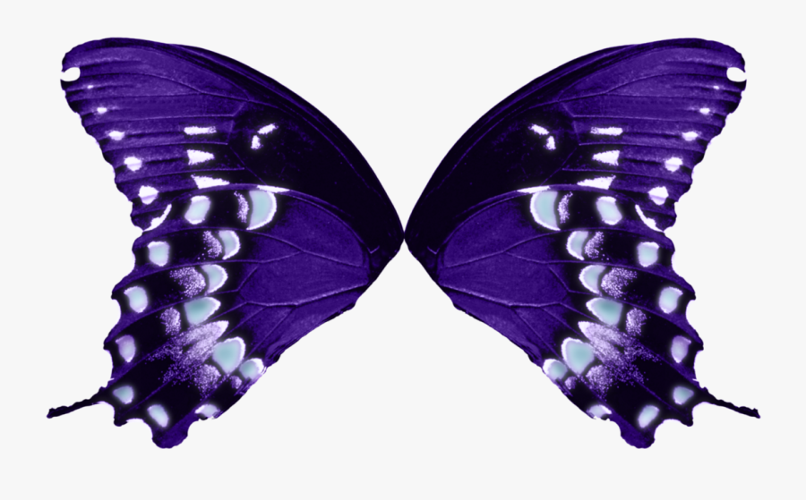 1123 X 711 - Butterfly Wings Transparent Background, Transparent Clipart
