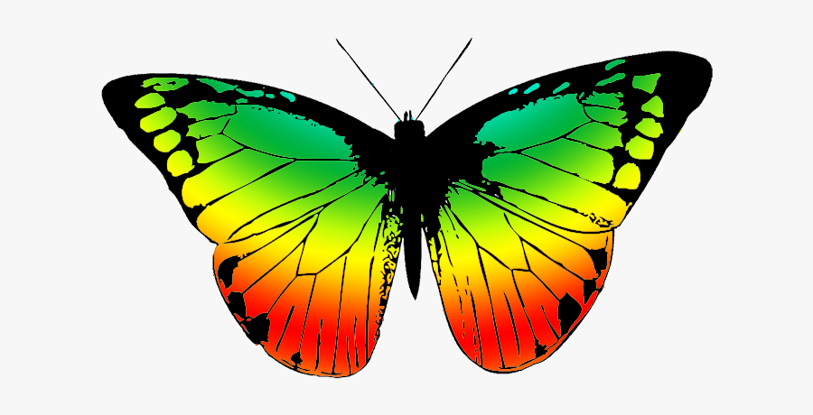 Wing Clipart Colorful - Transparent Butterfly Black And White, Transparent Clipart