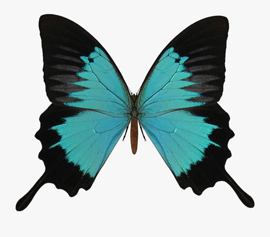 Butterfly Png Image - Butterfly Vector Transparent Background, Transparent Clipart