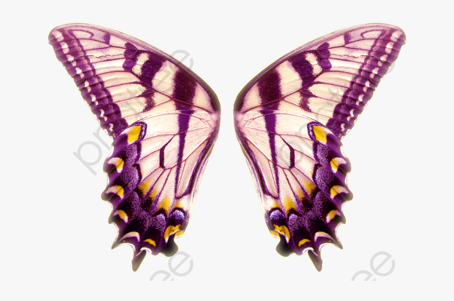 Butterfly Clipart Wings - Alas De Mariposa Png, Transparent Clipart