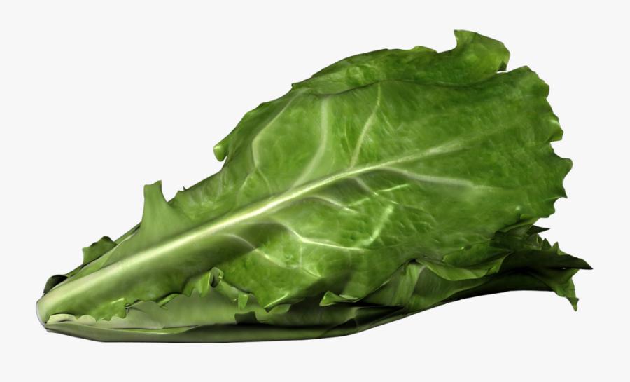 Romaine Lettuce Png - Romaine Lettuce Bent, Transparent Clipart