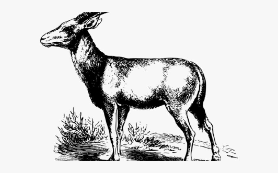 Antelope, Transparent Clipart
