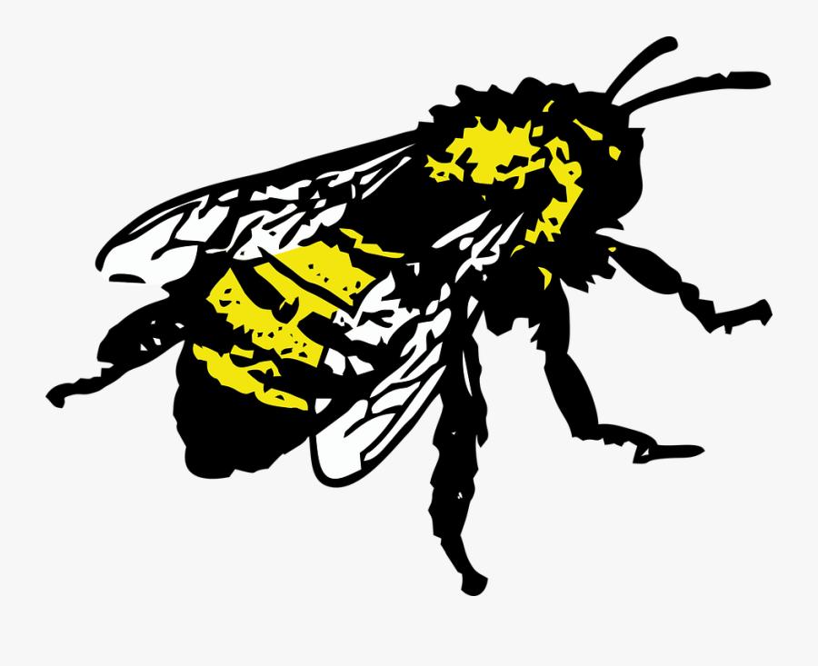 Honey Bee Graphic, Transparent Clipart