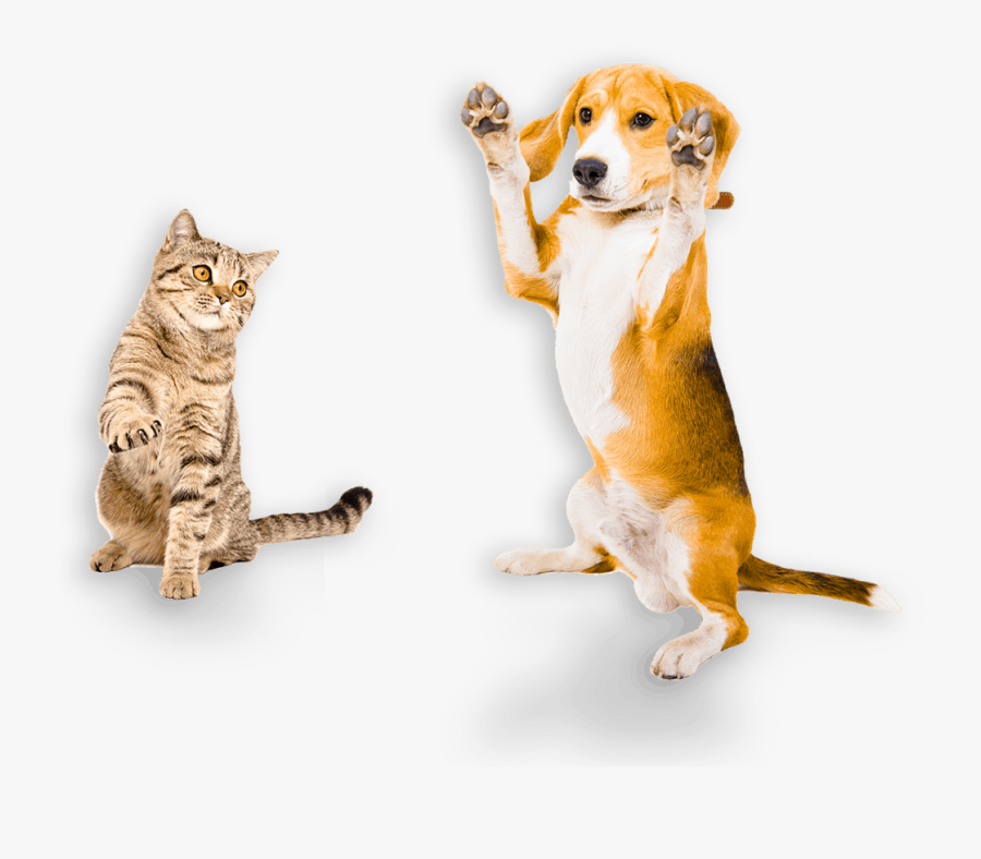 Australian Made Pet Treats - Dog With Paws Up Png, Transparent Clipart