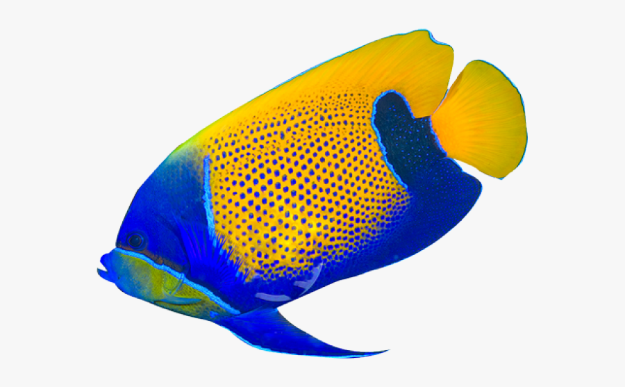 Fish Clipart Realistic Transparent Background Tropical Fish Png Free Transparent Clipart Clipartkey
