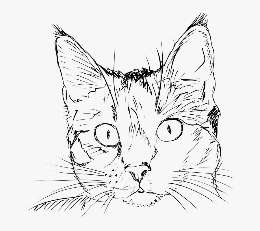Cat, Kitten, Drawing, Black And White, Portrait, Feline - Realistic Cat Face Outline, Transparent Clipart