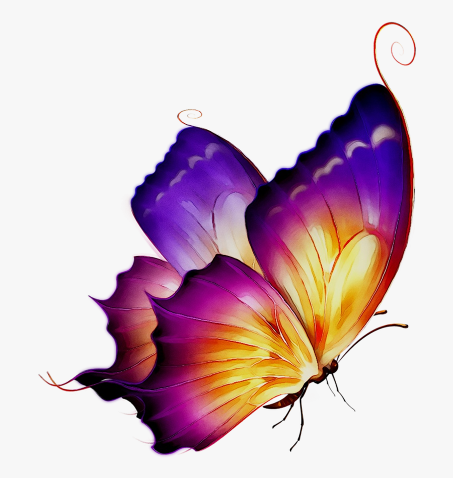 Butterfly Clipart Tshirt - Purple Butterfly Butterfly Png, Transparent Clipart