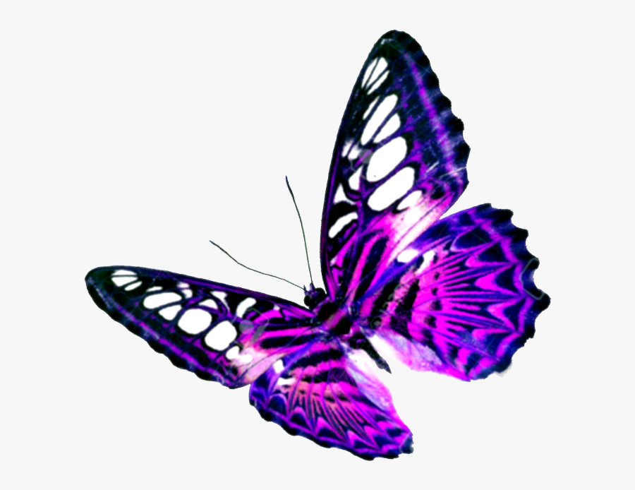 #mq #pink #purple #butterfly #butterflys - Mariposas Con Fondo Transparente, Transparent Clipart