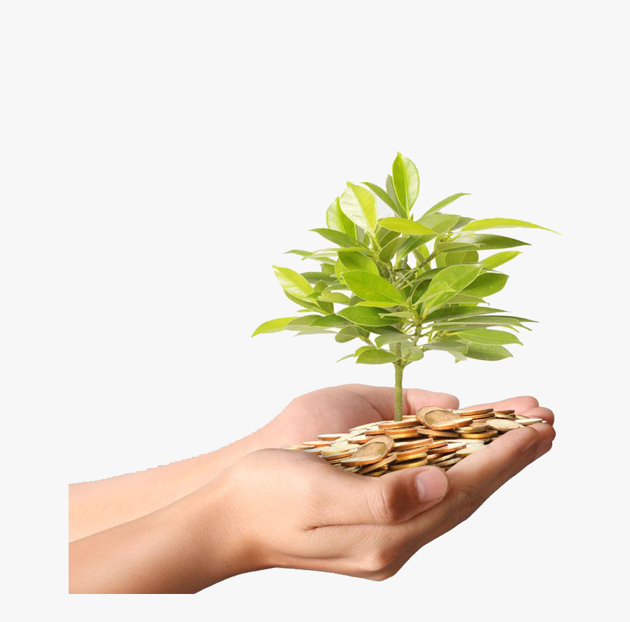 Clip Art Money Stock Photography Coin - Money And Plant In Hand, Transparent Clipart