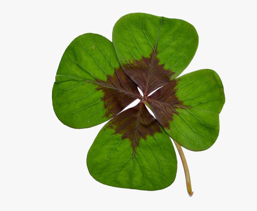 Four-leaf Clover, Luck, Green, Nature - Four-leaf Clover, Transparent Clipart