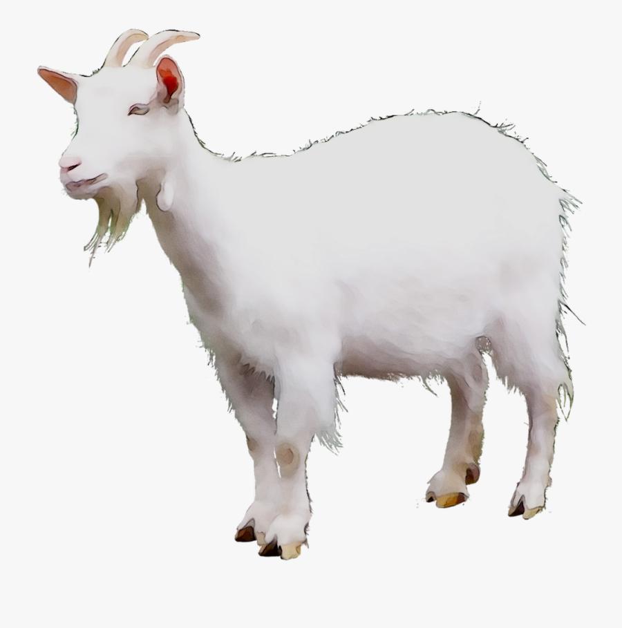 Mountain Goat Sheep Cattle Terrestrial Animal - Gambar Kambing Png, Transparent Clipart