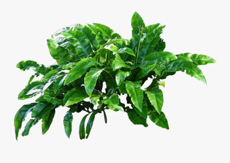 """Flowerpot Basil Baggin""""s Reusable Shopping Bag Plastic - Transparent Plant Png, Transparent Clipart"""