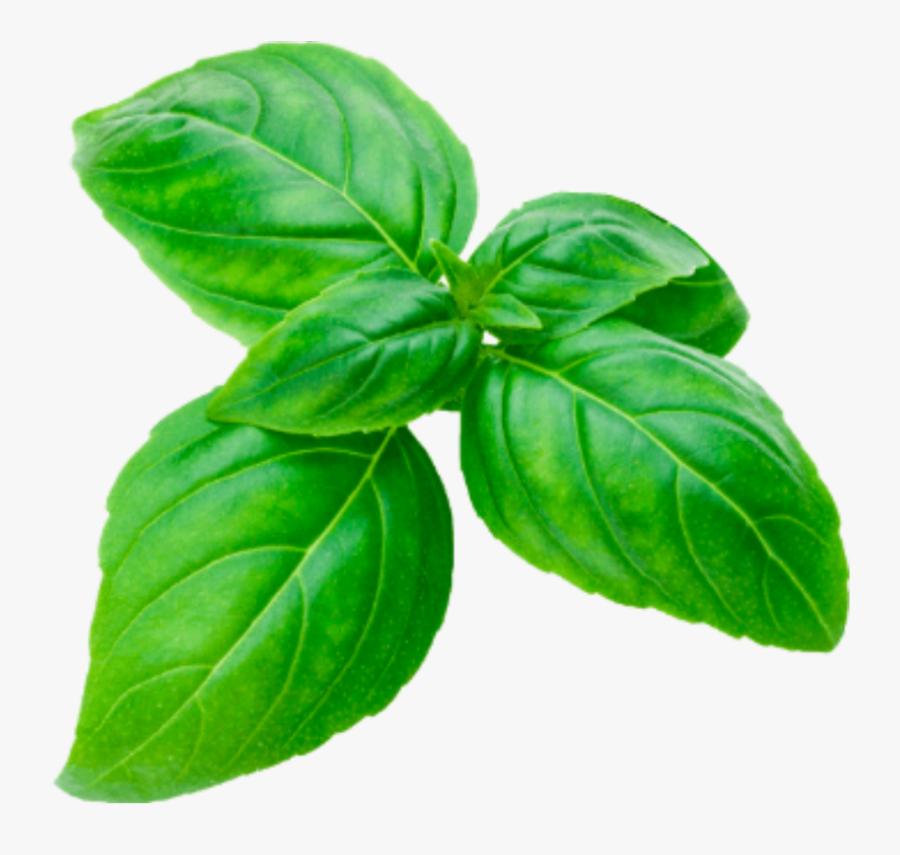 #basil #sprig #cutout #herbs #basilsprig #green #basilikum - Basil, Transparent Clipart
