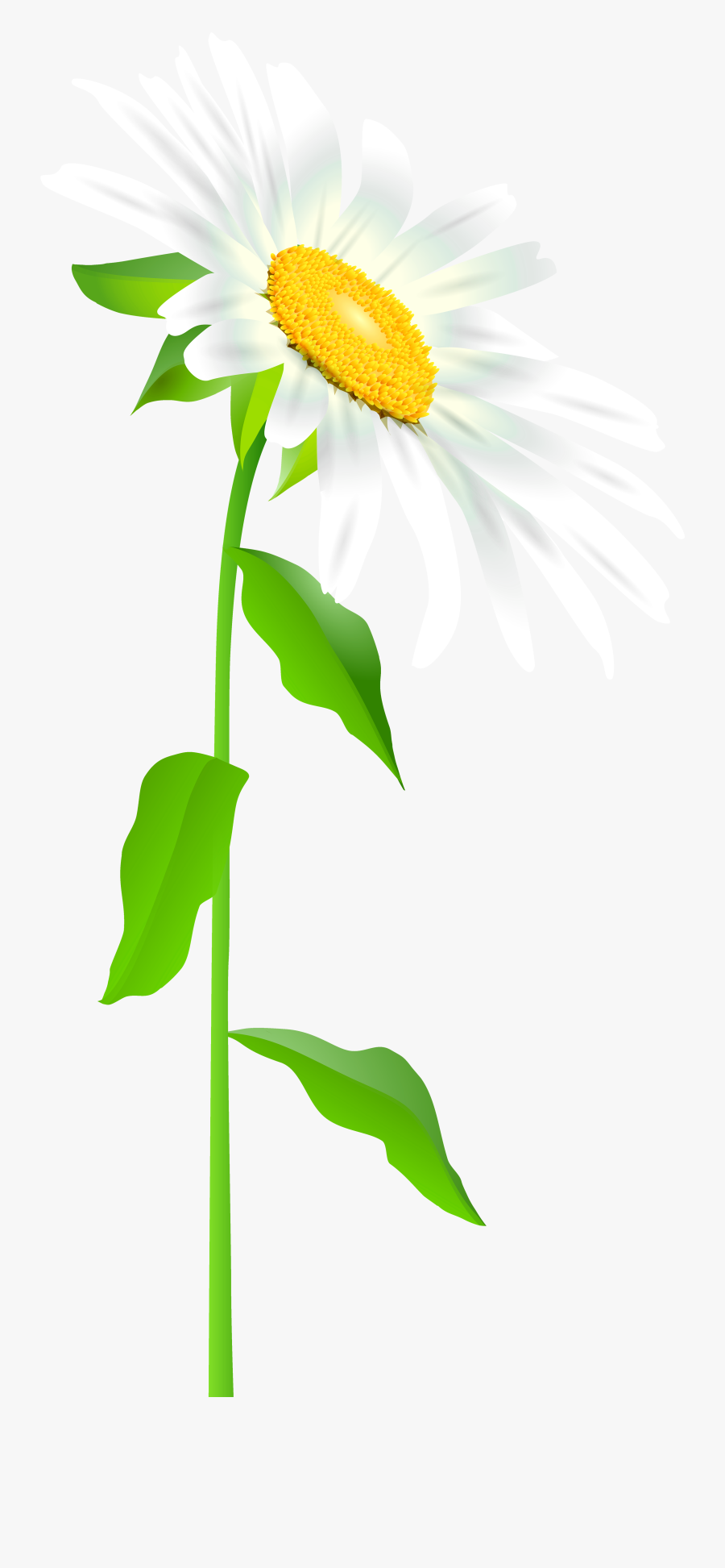 Daisy Clipart Long Stem Flower - Full Picture Of A Daisy ...