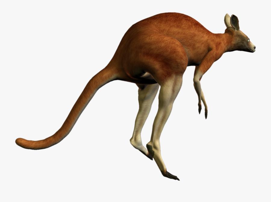 Kangaroo Png - Red Kangaroo Transparent Background, Transparent Clipart