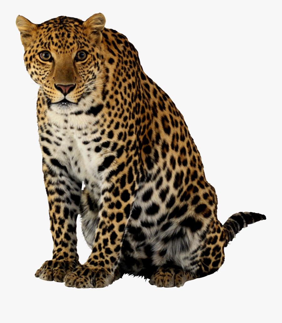 Cheetah Png - Leopard Png, Transparent Clipart