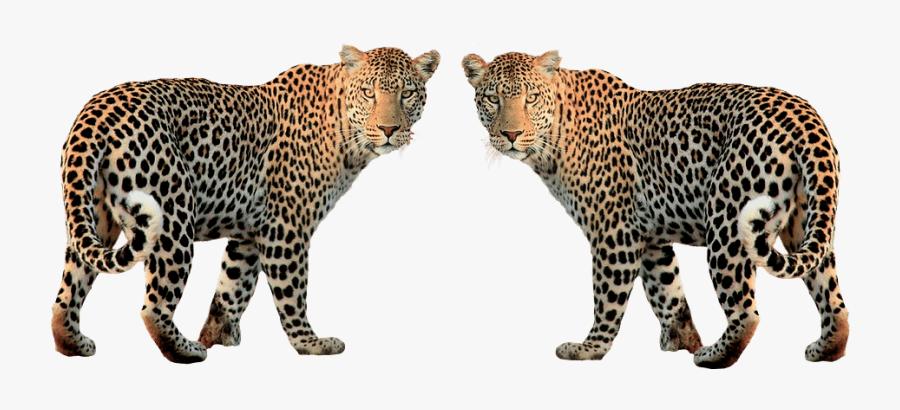 Leopard Clipart, Transparent Clipart
