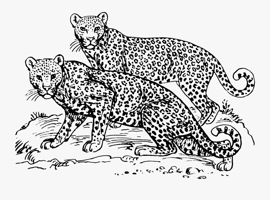 Png Freeuse Cheetah Black And White Clipart - Snow Leopard Cartoon Black And White, Transparent Clipart