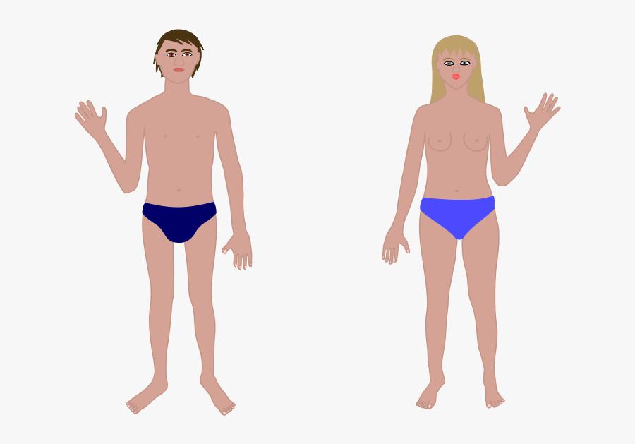Transparent Human Chest Clipart - Human Body, Transparent Clipart