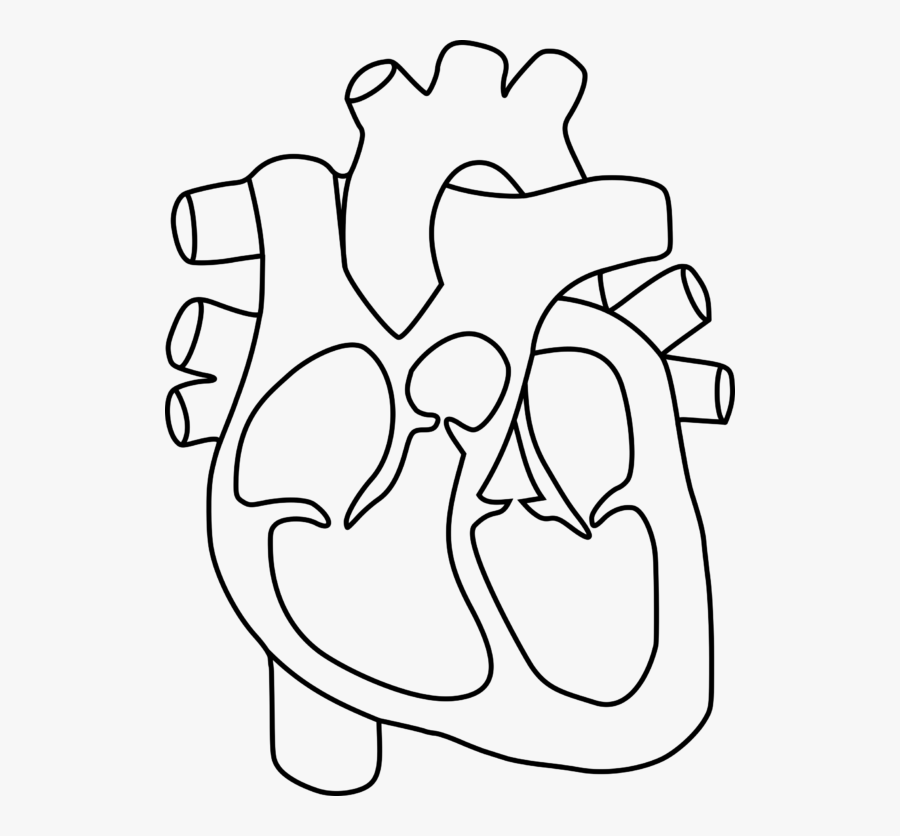 Human Heart Outline Drawing At Getdrawings - Human Heart Diagram Without Labels, Transparent Clipart