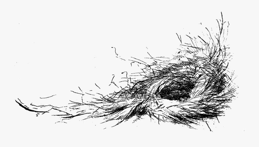 Transparent Bird Nest Png - Bird Nest Design, Transparent Clipart