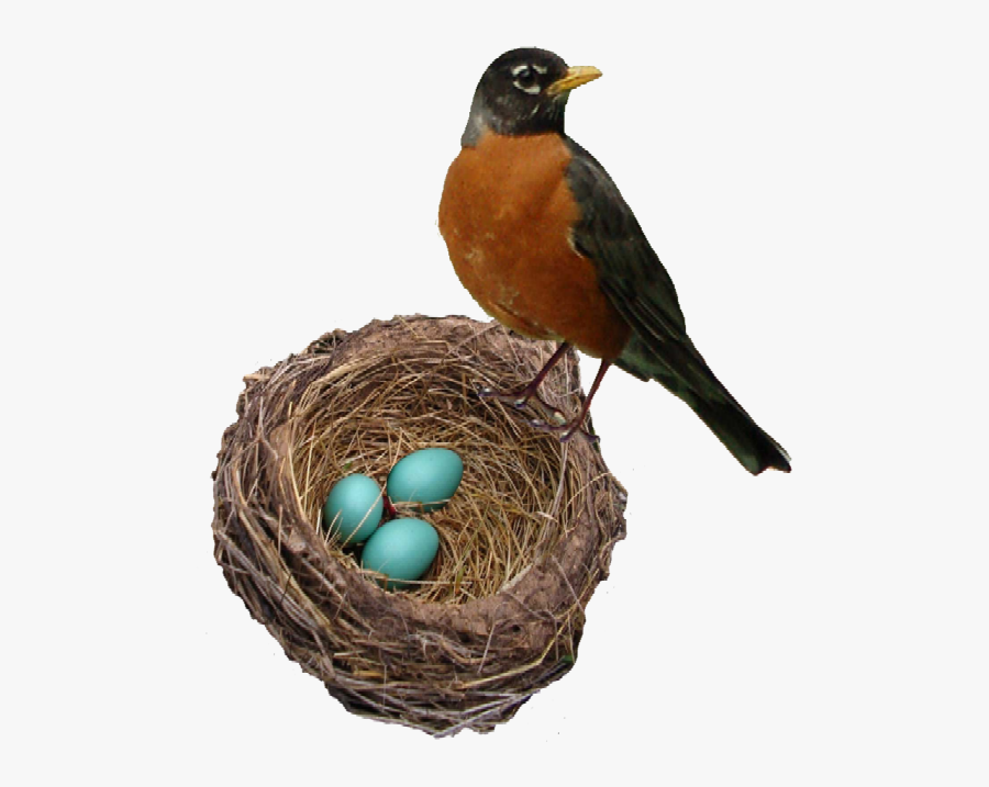 European Robin Png Background Image - Robin Bird And Eggs, Transparent Clipart