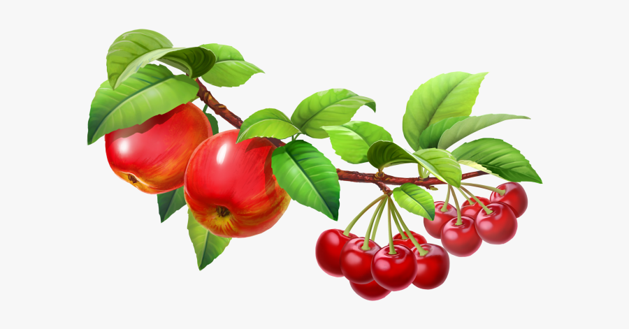 Fruit Tree Png - Fruit On Tree Clipart, Transparent Clipart