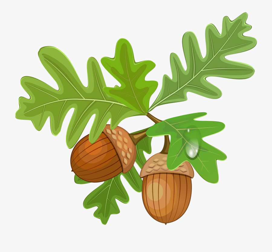 White Oak Tree And Acorn Clip Art Free Cliparts Royalty - Acorn With Leaves Clipart, Transparent Clipart