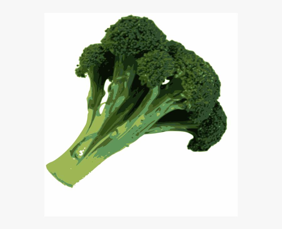 broccoli brokoli vector free transparent clipart clipartkey broccoli brokoli vector free