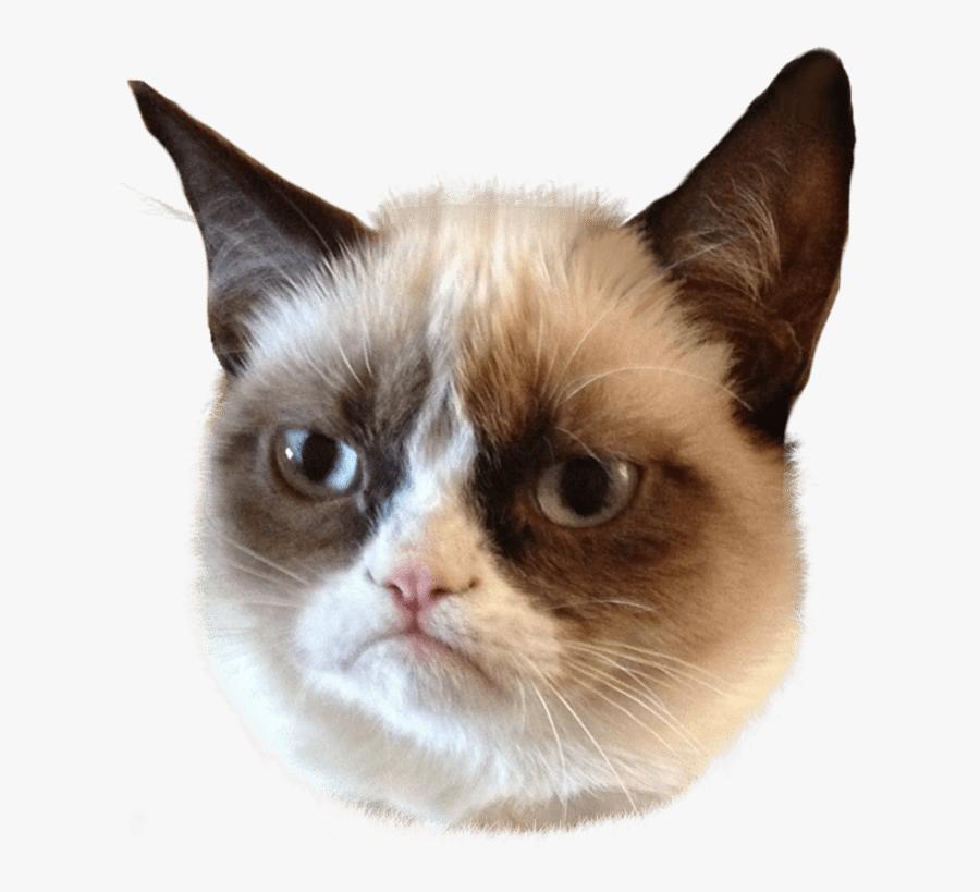 Grumpy Cat Head Clip Arts - Grumpy Cat Face Png, Transparent Clipart