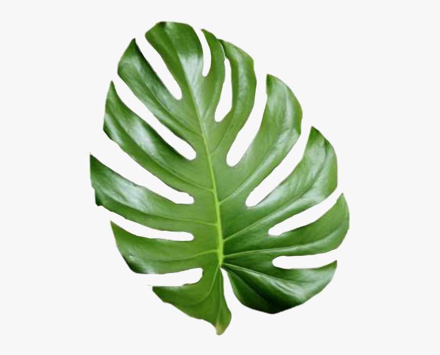 Tropical Png Tumblr Transparent Tropical Leaves Png Free Transparent Clipart Clipartkey License type what are these? transparent tropical leaves png free