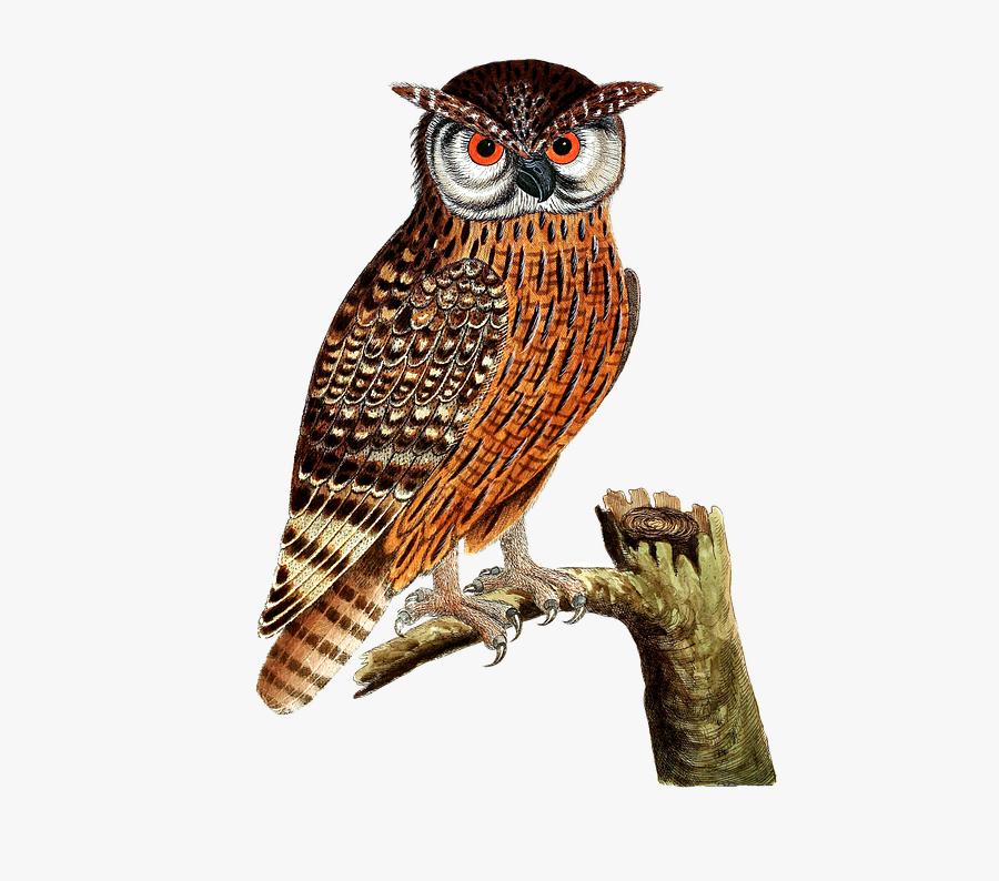 Kolase Gambar Burung Hantu Free Transparent Clipart Clipartkey