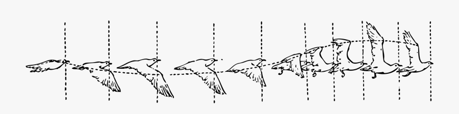 Symmetry,monochrome Photography,text - Bird Fly Animation Cycle, Transparent Clipart