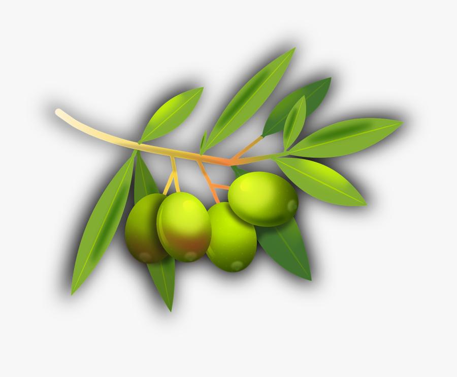 Olives Fruits Olive Tree Png Image - Olive Fruit Transparent, Transparent Clipart